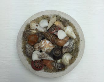 1:12th Scale Dollhouse Miniature Wood Bowl with She shells and Sand