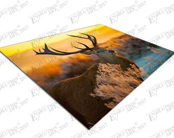 Print on Canvas Red Deer morning Sun Wildlife X1394
