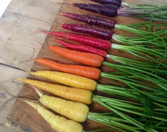 50 Rainbow Blend Non-Gmo Carrot Seeds
