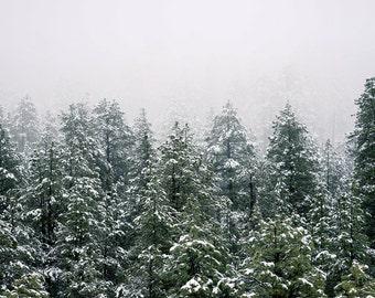 Winter Landscape Print - Forest Print - Forest Digital Print - Winter Forest Photo - Winter Wall Decor - Digital Photo - Digital Download