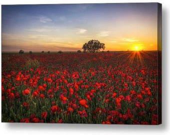 Poppy Field sunset Photo Canvas Box Art A4, A3, A2, A1 ++