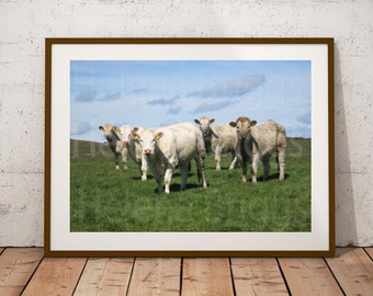 Farm Animals, Farm Animal Wall Art, Farm Animal Prints, Farm Animal Pictures, Farm Animal Art, Farm Animal Decor, Farm Animal Canvas, Cows