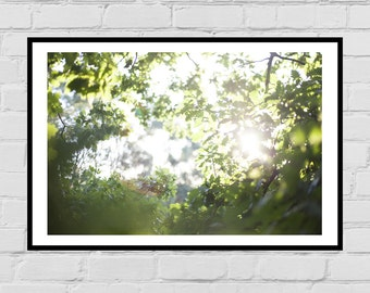 Oak tree golden hour digital photo print - wall art, home decor, original art, printable poster, digital download