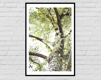 Tree digital photo print - forest, wall art, home decor, nature