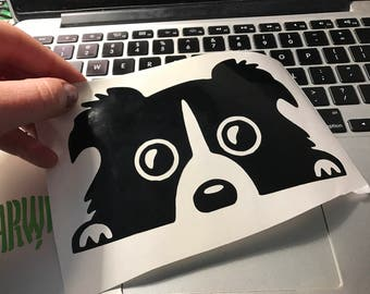 Begging Border Collie - Laptop or Car Decal