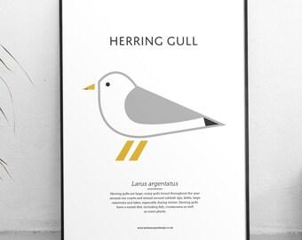 Herring Gull Print