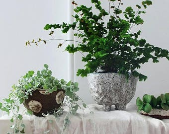 Ceramic planter pots // Australian pottery planter pots // ceramic plant no pot drainage // indoor pottery plant pots // retro planter pots