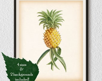 Wall art, Pineapple print, Vintge botanical print, Pineapple art, Fruit kitchen print, Kitchen wall art, Ananas, Printable digital art, #92