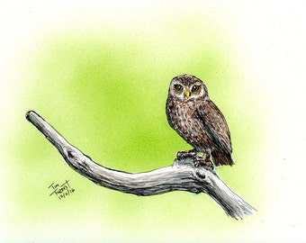Little Owl on limb with green background