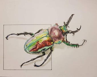 Rainbow Stag Beetle drawing