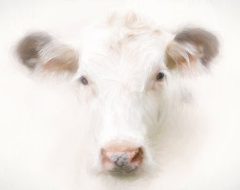 "Buttercup cow print 30x40"" Lustre print   PREORDER"