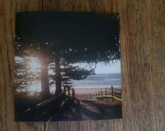Landscape Photography Coastal Pines beach photography limited edition