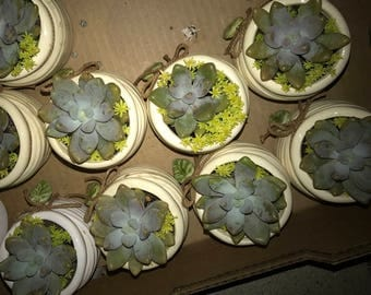10 Succulent Wedding Favors