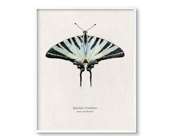 Butterfly Art Prints, Large Wall Art, Printable Art, Digital Download, Butterfly Decor, Wall Art, Art Prints, Poster, Butterfly Wall Art