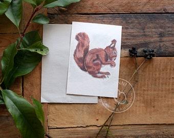 Watercolor Squirrel Postcard Set