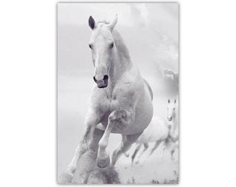 White Horse, Stallion, Animal Art, Canvas Print, Minimalist, Large Poster