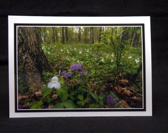 Wildflowers Dancing Along The Forest Floor 5x7 Blank CArd By ThomasMinutoloPhotos