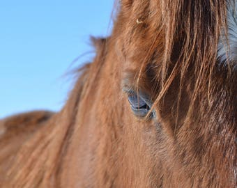 Horse Expression - Warm spring / Horse expression - Spring sweetness