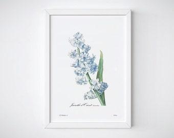 Redoute art, Botanical Print, Blue Flower, Wall Decor, Room Decor | JACINTHE BLEUE