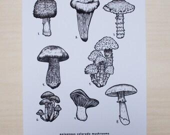 Poisonous Mushrooms of Colorado