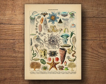 Coastal art canvas print – Scientific illustration, Vintage art, Coastal prints, Nautical prints, Beach art, Sea art, Vintage art