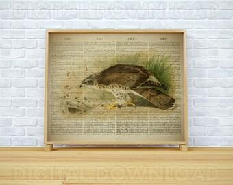 Wall prints, Vintage dictionary, Bird print, Dictionary print, Bird wall art, Digital prints, Book pages, 8x10 wall art, Download art print