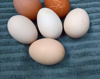 Fresh Free Range Chicken Eggs
