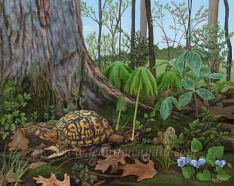"""Signs of Spring- Eastern Box Turtle- Limited Edition Print 12"""" x 16"""""""