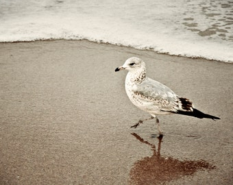 Leaving Tracks - Seagull on the Beach - Beach Photography - Seagull Art Print - Nature Photography - Bird Photography - Seagull Photo