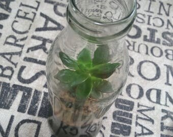 Succulent Bottle Terrarium - Small Sorrento