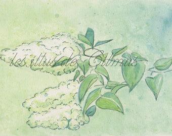 """Affiche A5 à télécharger """"Lilas blanc"""" : collection """"les fleurs"""""""