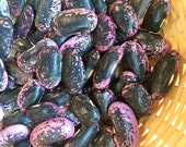 Scarlet Runner - Bean - Heirloom Garden Seed