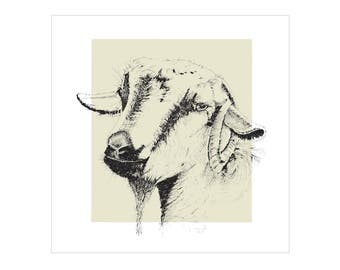 Goat |  Greeting card