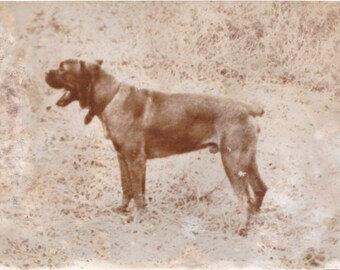 Antique Sepia Photo black dog