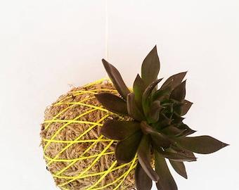 Hanging Kokedama Japanese Plant Ball