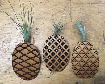Engraved Pineapple Tillandsia Air Plant Wall Holders (quantity 3)