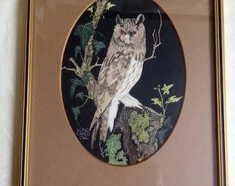 Long Eared Owl -  John Morland - Hand Coloured Print - Wildlife - Framed - Fine Art