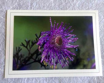 Hand Made Blank Photo Note Card-08 Rose Coneflower