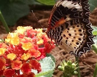 instant download, butterfly photo, butterfly, flowers, art, nature photography, nature, butterfly picture