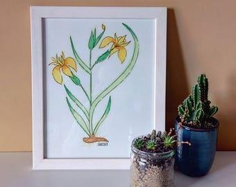 Original watercolour Lily
