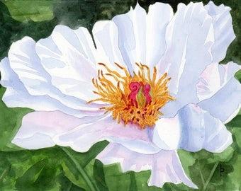 White PEONY  original watercolor SFA