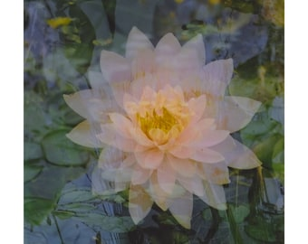 floating lotus: nature photography. flower photography. surreal photography. multiple exposure photograph. zen decor. pink fine art print.