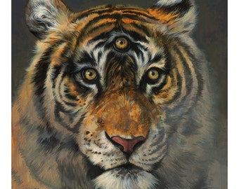 A Wise Tiger 11x14 Print