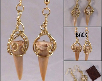 Fossilized Shark Teeth in brass, earrings