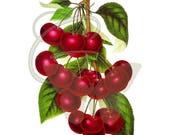 Fruit Printable Cherry Clip Art Botanical Scrapbooking Artwork Digital Crafting Download Illustration