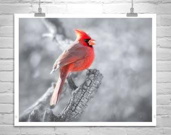 Cardinal Bird Picture, Bird Photography, Bird Art, Red Cardinal, Nature Photography, Wildlife Art, Art for Bedroom, Tucson Arizona