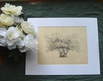 Lover's Oak Tree Pen and Ink Drawing Art Print on Wood Veneer - 11x14 - Georgia