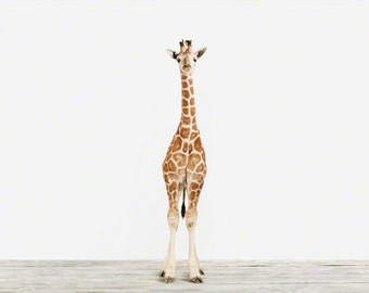 Animal Nursery Art Print. Baby Giraffe No. 3. Safari Animal Wall Art. Animal Nursery Decor. Baby Animal Photo.