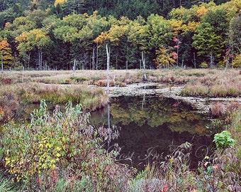 Landscape Photography, Rustic Wall Art, Adirondack Mountains, Autumn Photo, Fall Leaves, Woodland Decor, Fine Art Photograph, Yellow, Green