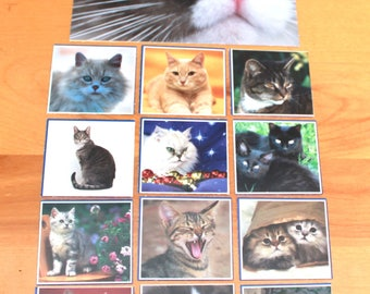 cat pictures G-1,cats,Scrapbooking cat picture pack supplie ,G-1,cat picture pack,crafting cat pictures,cat pictures,scrapbooking supplies,